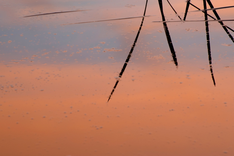 Pond_Reflection_Sunset_by_Kerry_Drager